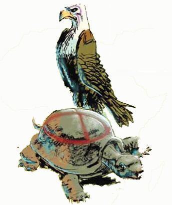 aquilaetartaruga