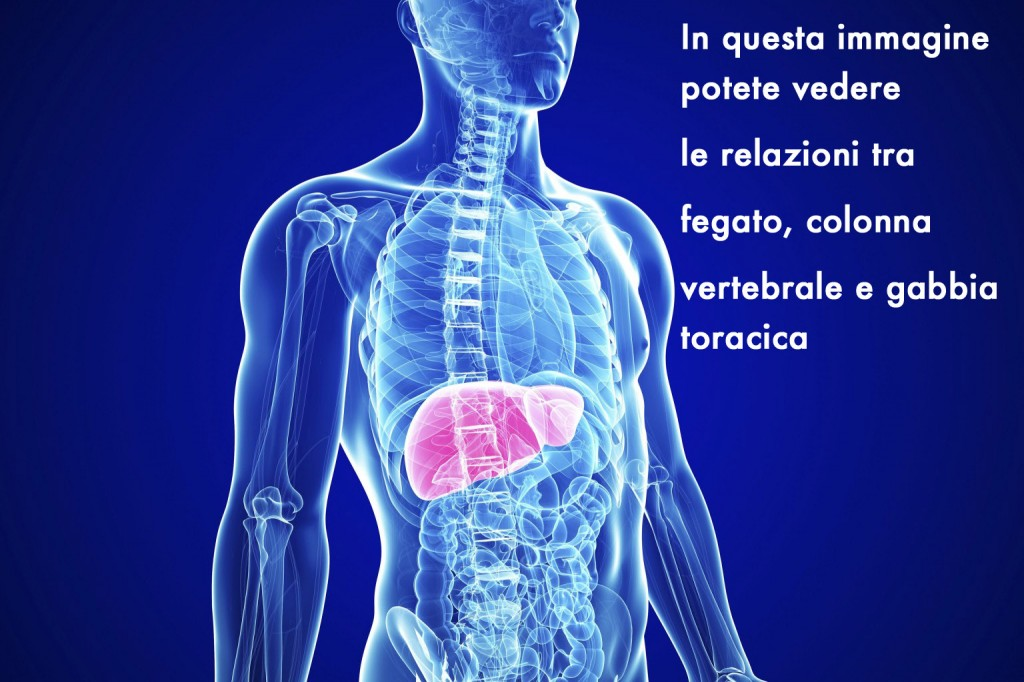 o-liver-health-facebook-copia (1)