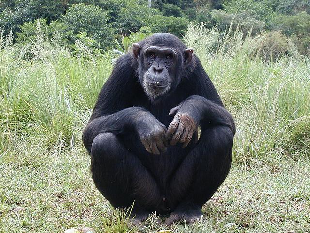 scimmiaseduta