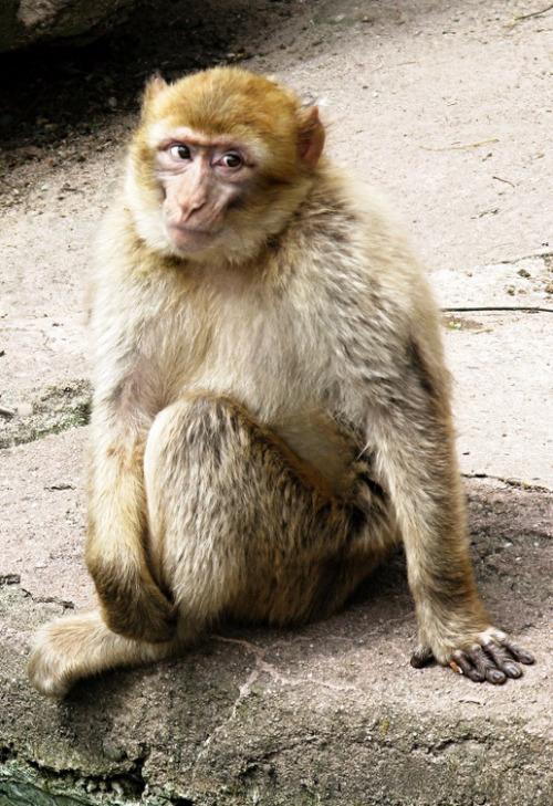 scimmiaseduta1