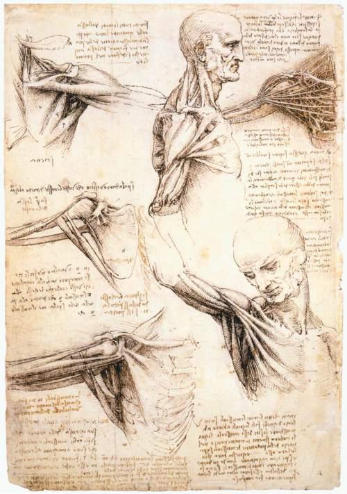 leonardo_da_vinci_-_anatomical_studies_of_the_shoulder_-_wga12824